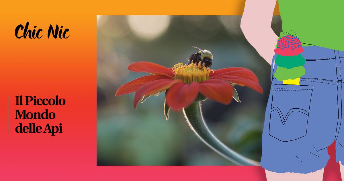 ws-apicultura-copia